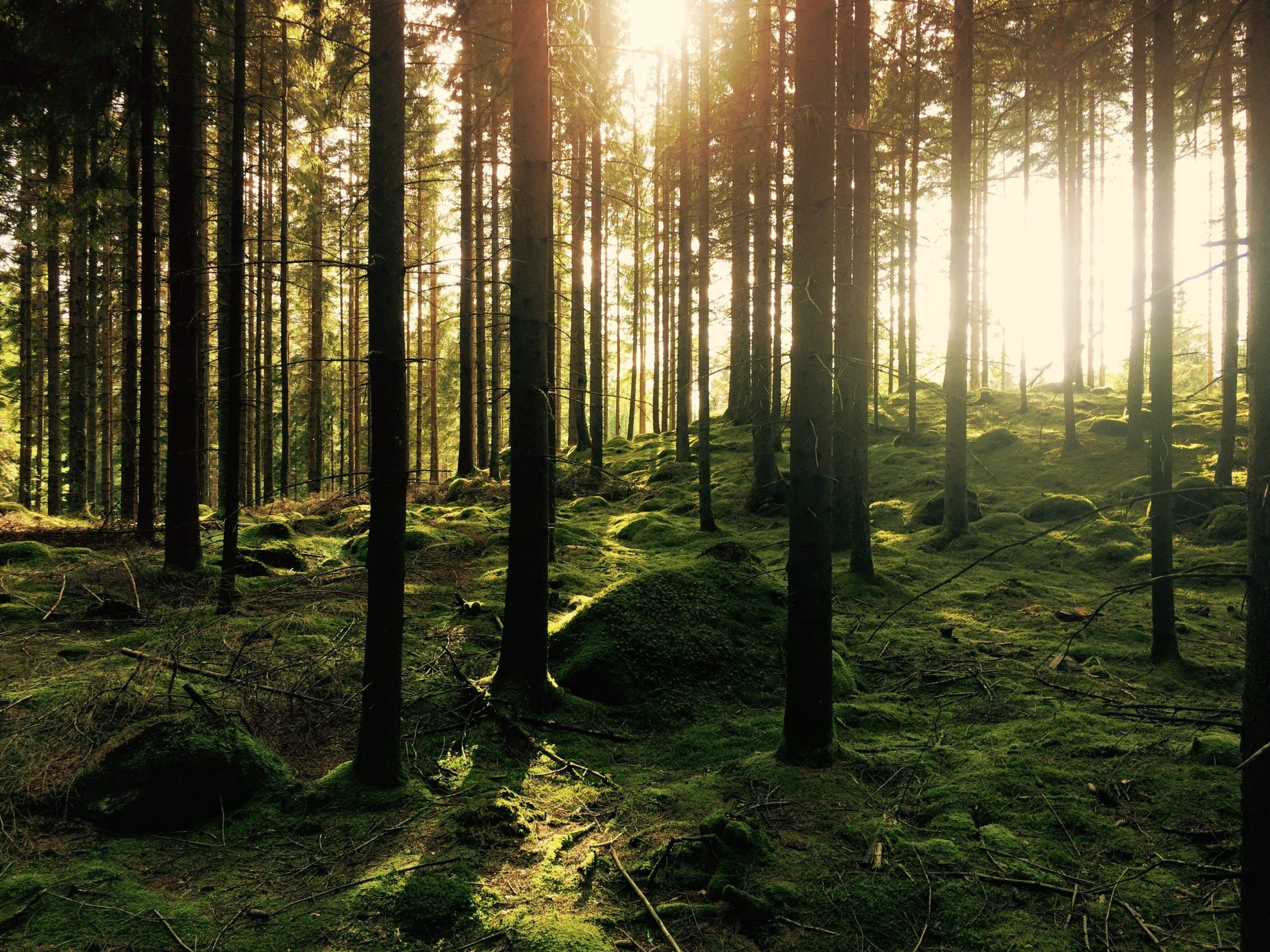 la nature est un luxe